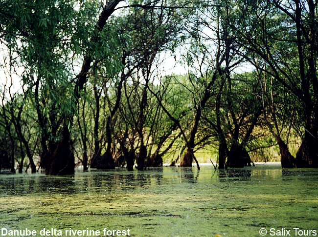 Danube Delta riverine forest