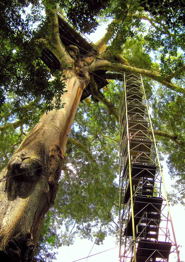 Canopy tower, Peru