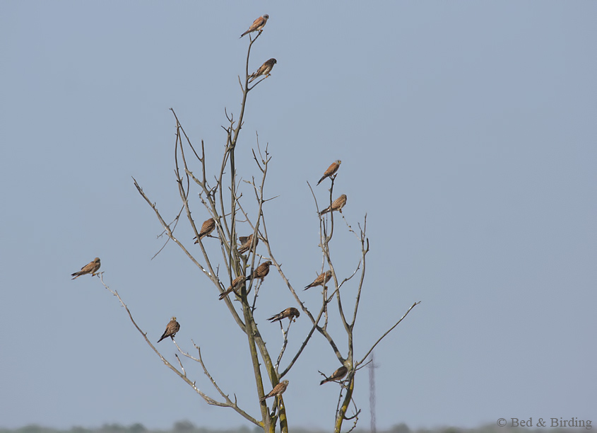La Pajarona-Bed-and-Birding-Extremadura